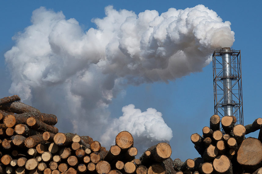 Bioenergie Holz